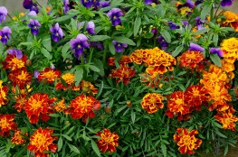 ScenicScape Landscaping, Lawn Care, and Irrigation - Featured images for Our Landscapers Love Flowers