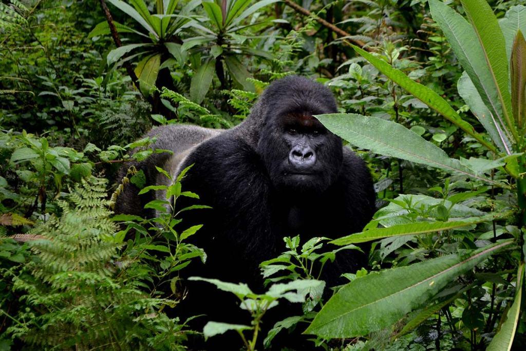 Uganda Gorilla Trekking Day