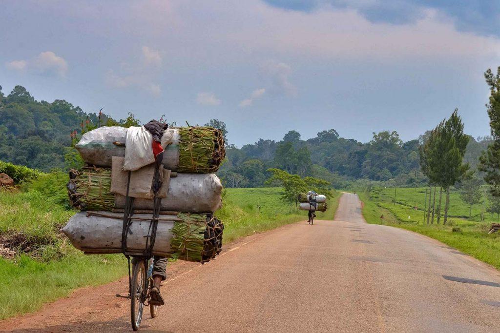 Kibale Road Trip