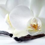 Scent Spotlight Vanilla