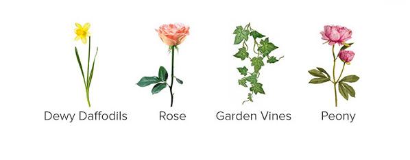 Dahlia & Vines notes