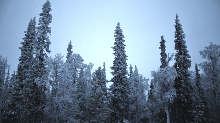 【フィンランド】極夜のラップランドを走る