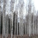 【フィンランド】西部の小都市(ハメーンリンナ、ヴァーサ、タンペレ)とフィンランドの不思議