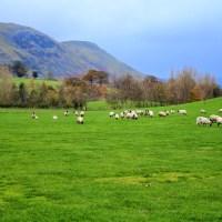 【イギリス】羊好きにはたまらないイングランド湖水地方
