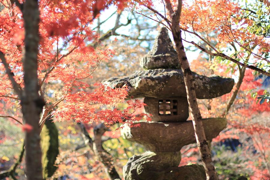 eikando autumn1