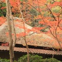 【京都洛西】味のある真言宗小寺院 蓮華寺・祇王寺と広沢池ほとりの千手観音