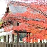 【京都洛北】上賀茂神社が人々に愛される5つの理由