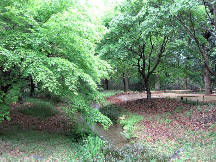 tadasu forest2