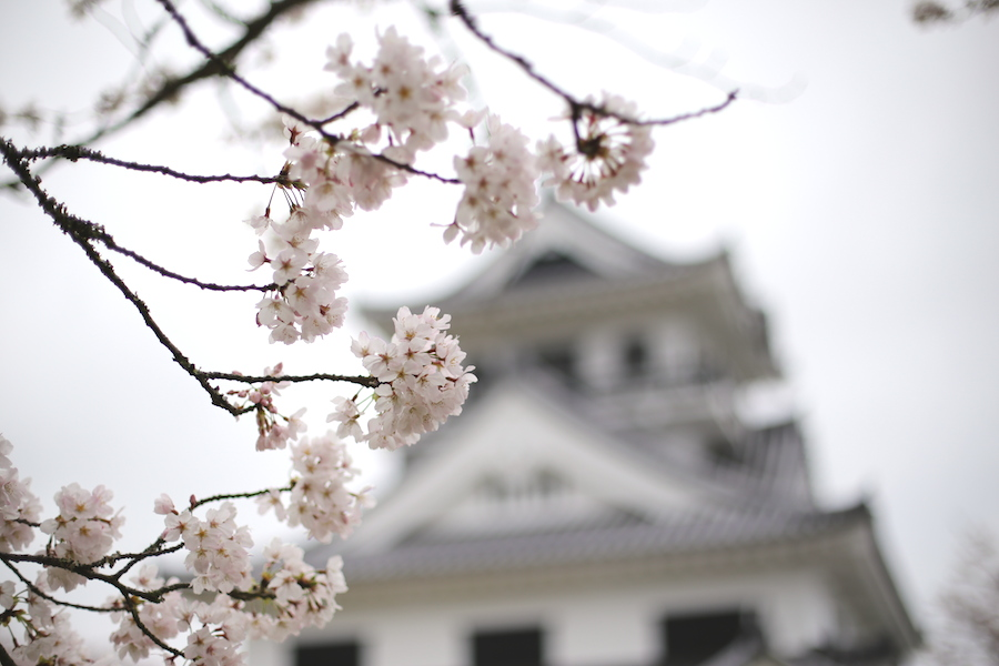 tateyama castle1