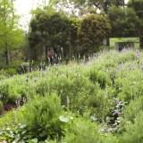 【台湾】異空間なLavender Cottage(薰衣草森林)はじめてガイド