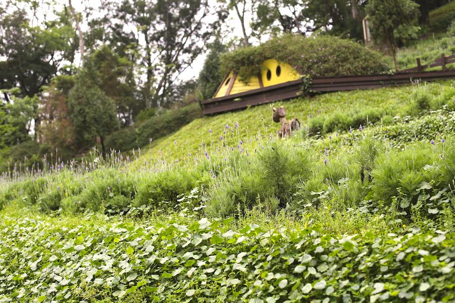 lavender cottage7