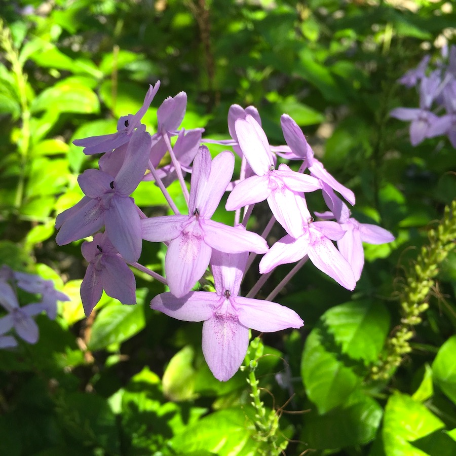 spore flowers