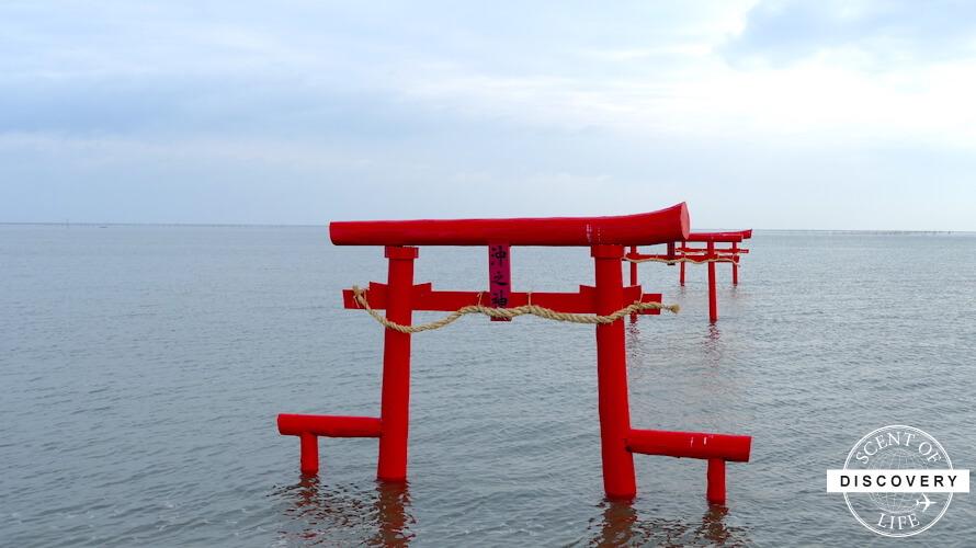 【佐賀太良町】海中鳥居を見て冬が旬の竹崎カキを食べに行こう!