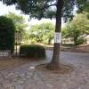 染地公園(調布)