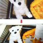 ペットのお写真を使ったオリジナルジグソーパズルのご注文が増えています