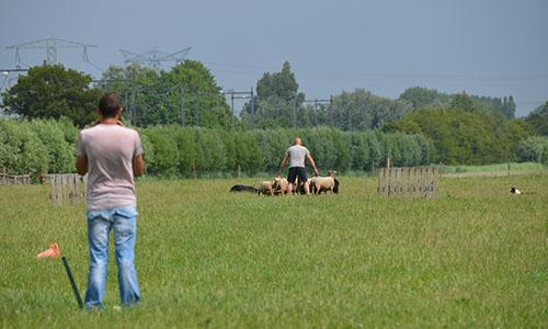 trainingen schapendrijven-1