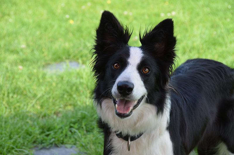 summer hond