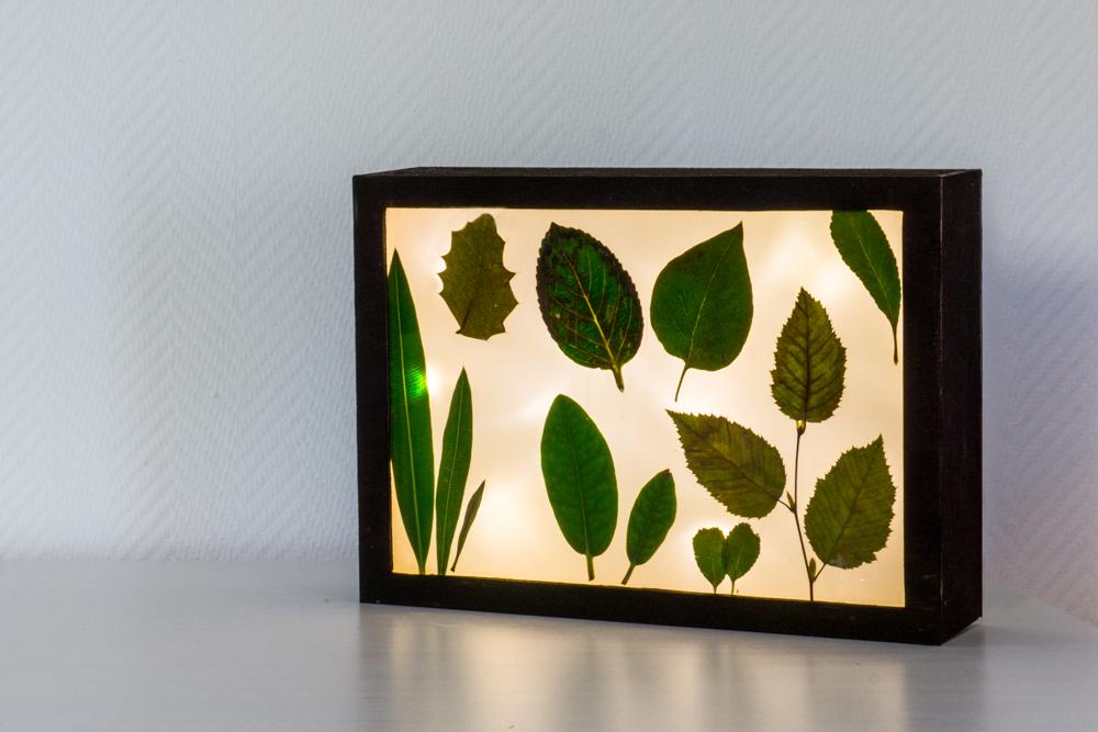 Lichtbox mit Sommererinnerungen für Frosch