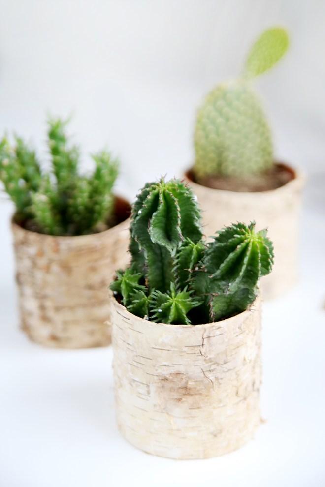 schereleimpapier DIY und Upcycling Blog aus Berlin - kreative Tutorials für Geschenke, Möbel und Deko zum Basteln - DIY Pflanzen Deko
