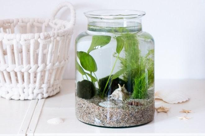 Wasserpflanzen im Glas schereleimpapier DIY