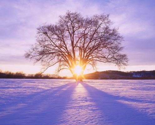 Untergehende Sonne frontal hinter winterlichem Baum im Gegenlicht
