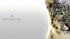 Wallpaper-Snow-Leopard-Katze