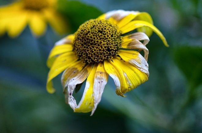 Eine Blüte. Foto: Hufner