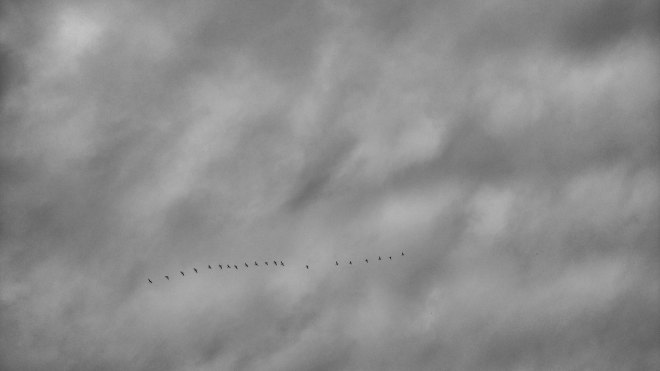 Vogel Zug nach Süden. Foto: Hufner