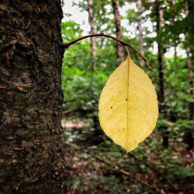 Blatt / Baum. Foto: Hufner