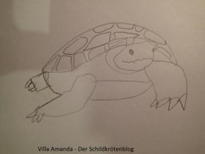 Wie man eine Schildkröte zeichnet