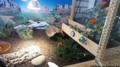 Schildkröten Balkon Gehege