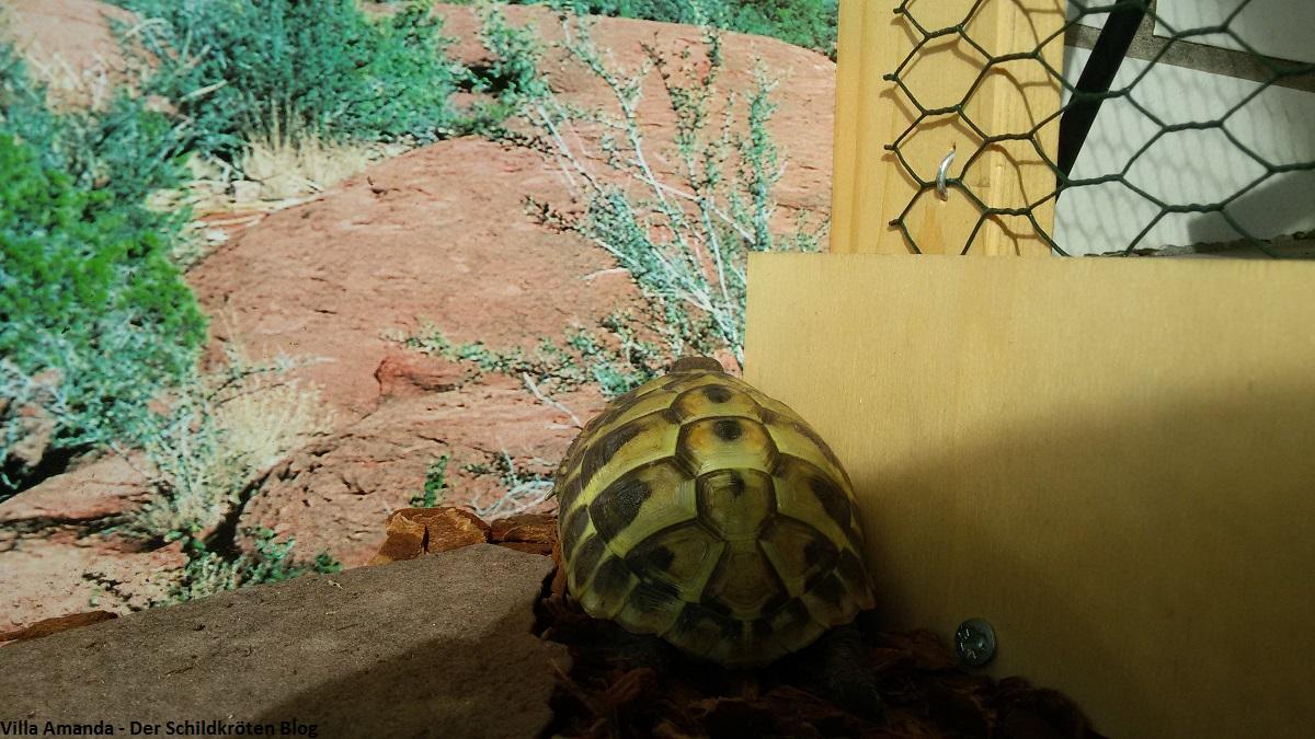 Schildkröten Saison 2016 neigt sich dem Ende entgegen