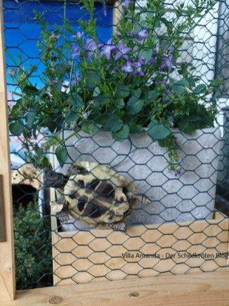 Schildkröte klettert