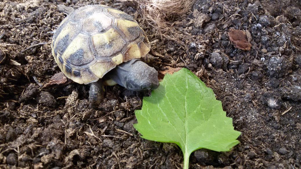 Alle Schildkröten sind wieder da