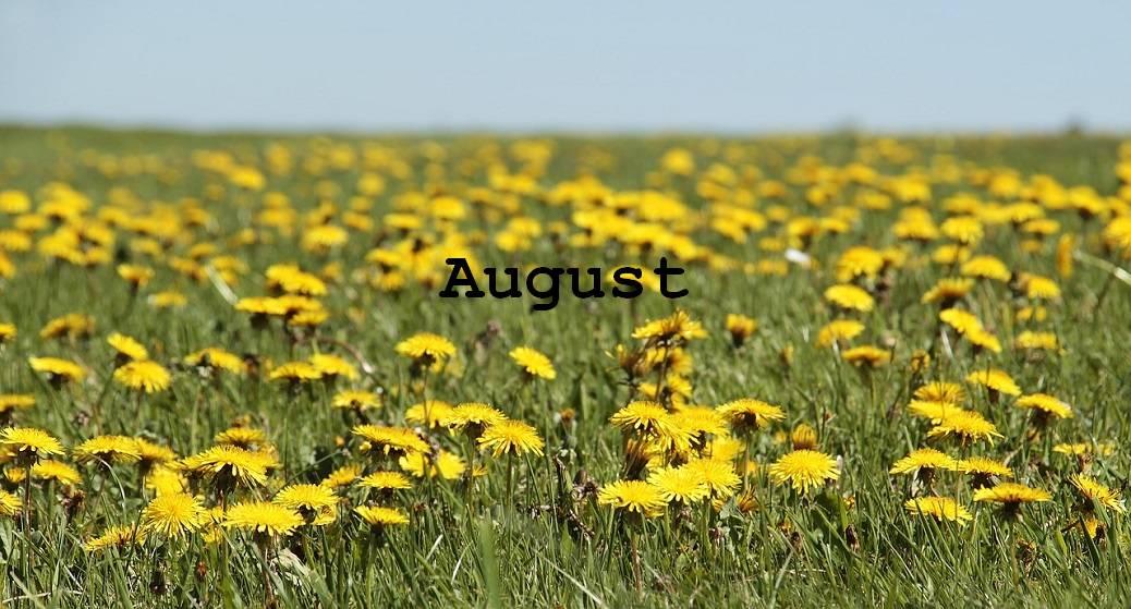 Futterpflanzen Sammelkalender: Schildkrötenfutter im August