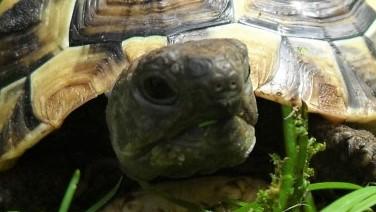 Schildkröte riecht