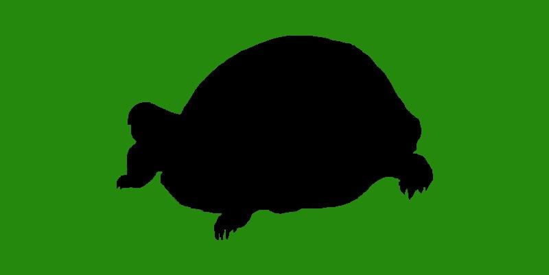 Schildkröte des Jahres 2021 – Das Voting