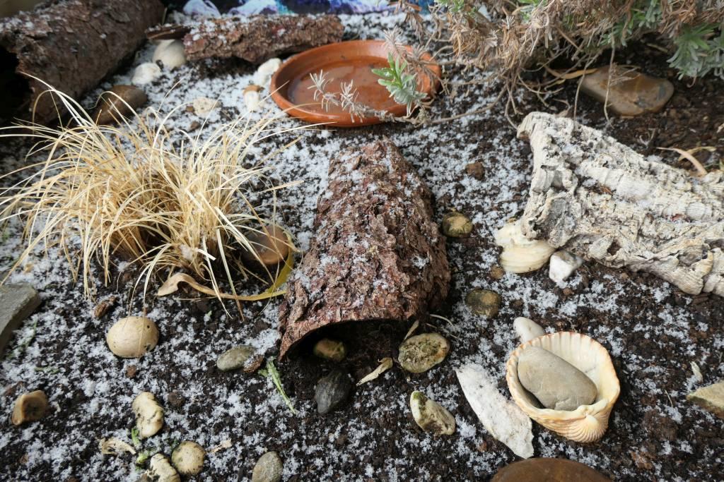 Read more about the article Der Winter kam noch mal, die Schildkröten verschwanden wieder
