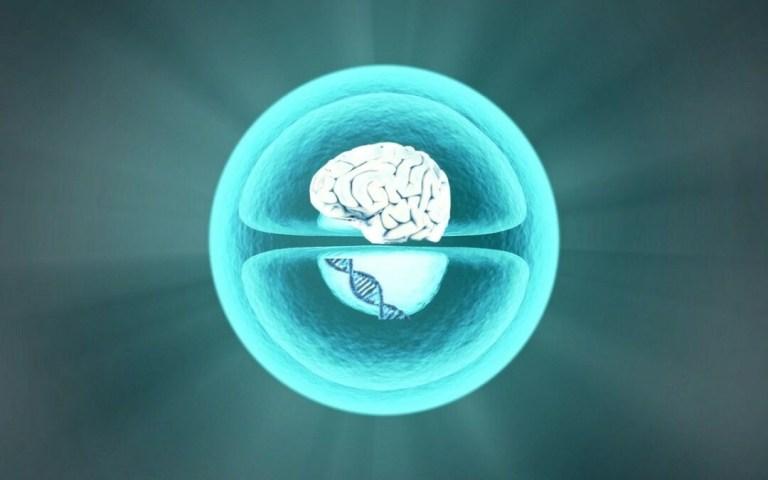 Epigenetik, Zellgedächtnis, Trauma und Emotionale Erinnerung – Allergie ist nicht nur ein entgleistes Immunsystem