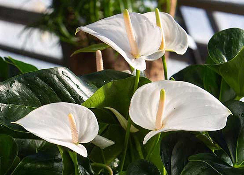 belles plantes a fleurs blanches