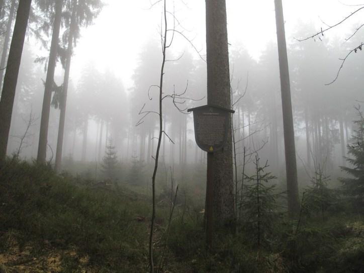 Impressionen (Harzer Hexenstieg)