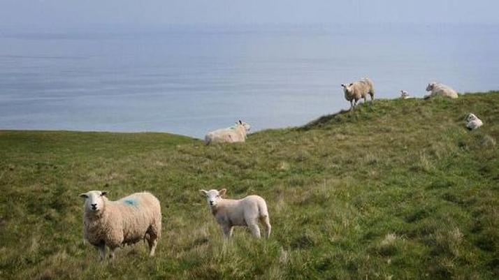 Voor 1 pond woon je in een boerderij in Wales