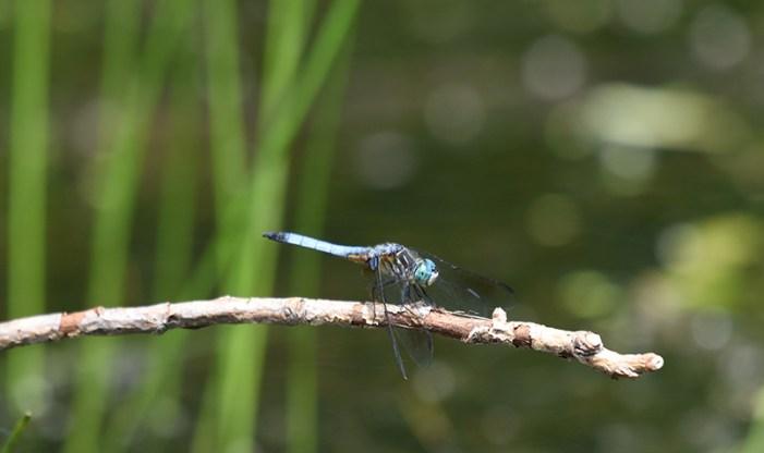 Schlitz Audubon Summer Seasonal Sightings