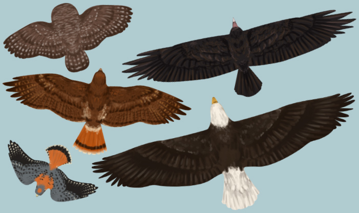 Soaring Silhouettes Raptors Midwest