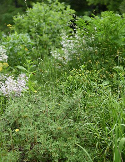 Walk in the Woods Silverweed Schlitz Audubon