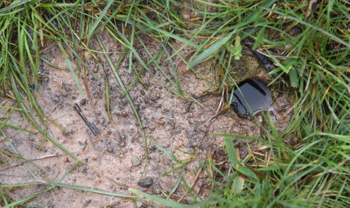Prairie Crayfish Burrow