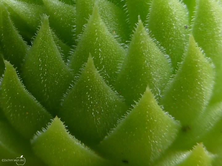 green spike