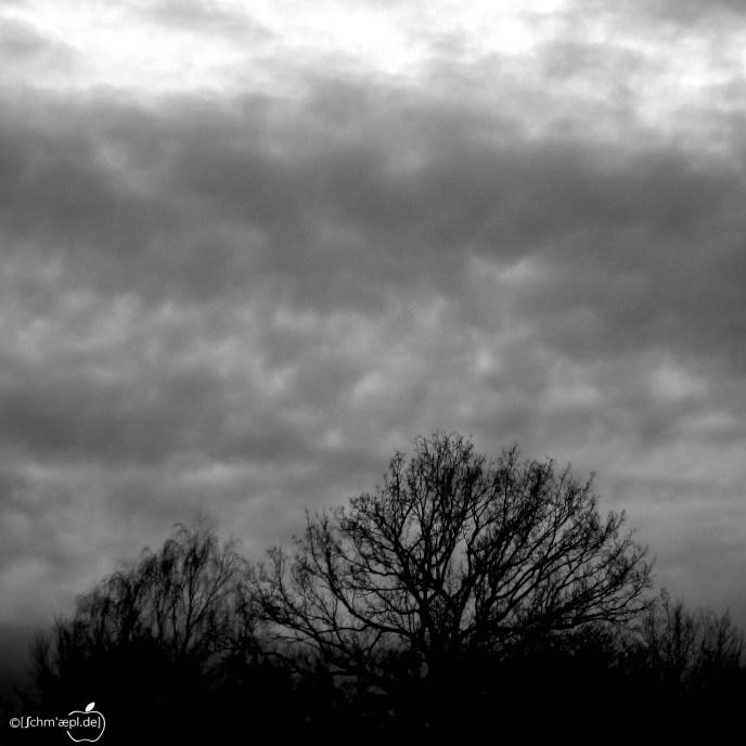 wild_sky