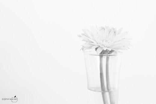 High Key Flower
