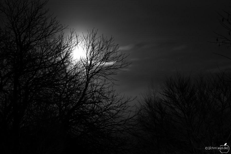 Moonlight_3